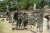 Elephants Terrace