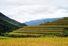 Sapa by bus 2 days – 1 night Bac Ha Market (overnight in hotel - Depart on only Saturday) HA3