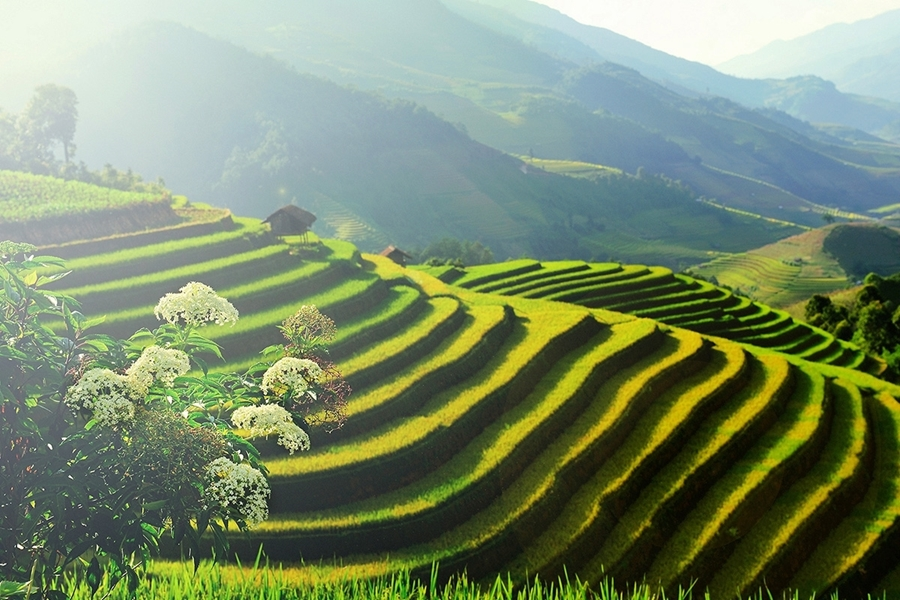 Sapa by bus 2 days 1 night with Fansipan peak The roof of Indochina HA8