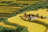 Sapa by bus 3 days - 2 nights Bac Ha Market (2 nights in hotel - Depart on only Friday) HA6